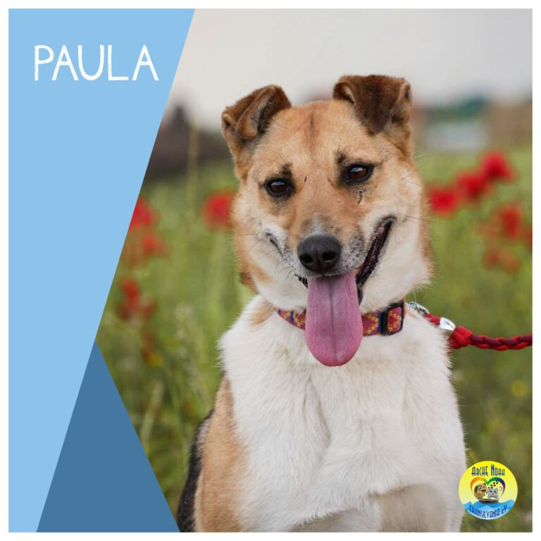 Read more about the article Paula  |Reserviert|