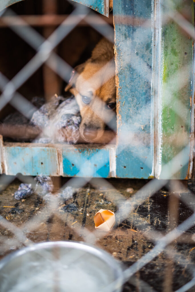 Hund in Tötungsstation
