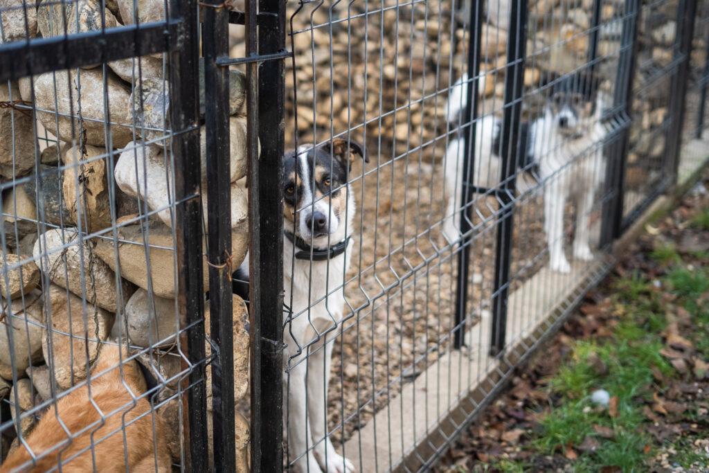Tierschutzhund in einem Zwinger in der Arche Noah