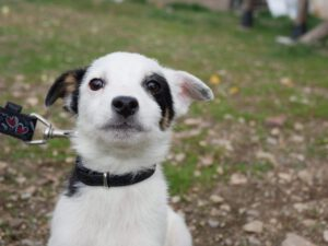 Rumänischer Straßenhund
