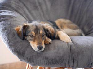 Hund auf Arm