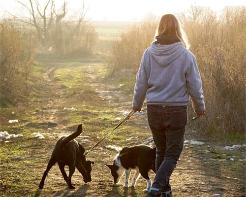 Spaziergänge mit den Hunden