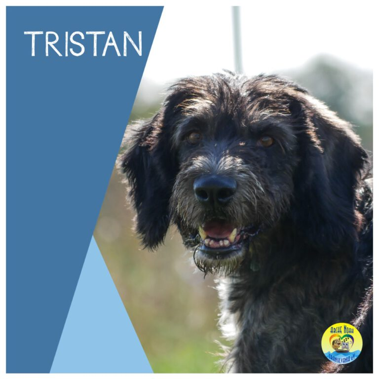 Read more about the article Tristan