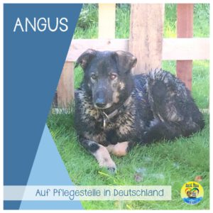 Read more about the article Angus